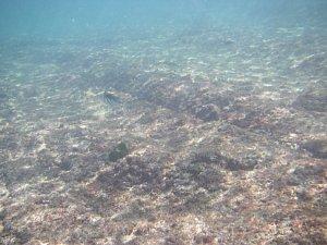 0285カマービーチ海中.JPG