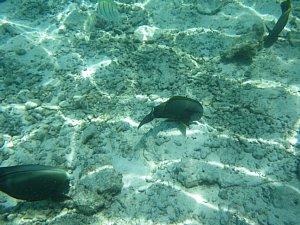 0524モルディブ2009海の中5.JPG