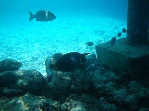 0525モルディブ2009海の中6.JPG
