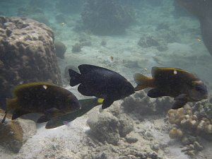 0777コタ2009サピ島海の中.JPG