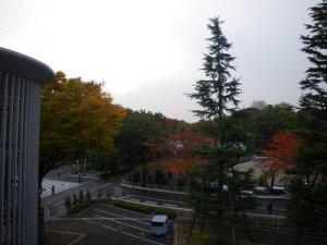 1379東京競馬場.JPG